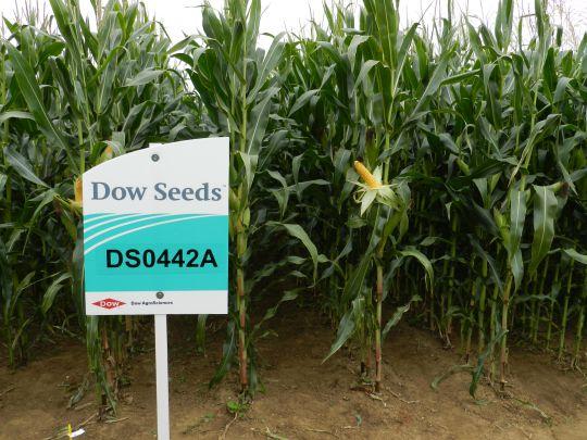 DS0442A plante entière